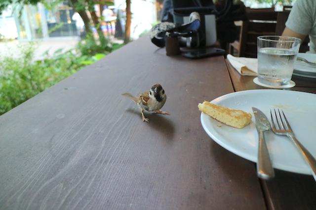 IVY PLACE スズメに食べられる